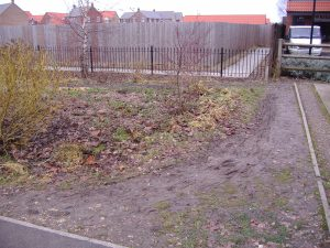 Planted area after rubbish cleared